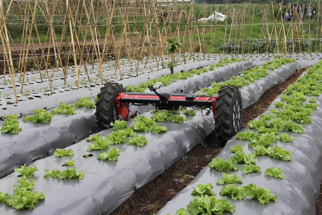 Agricultural robot on field