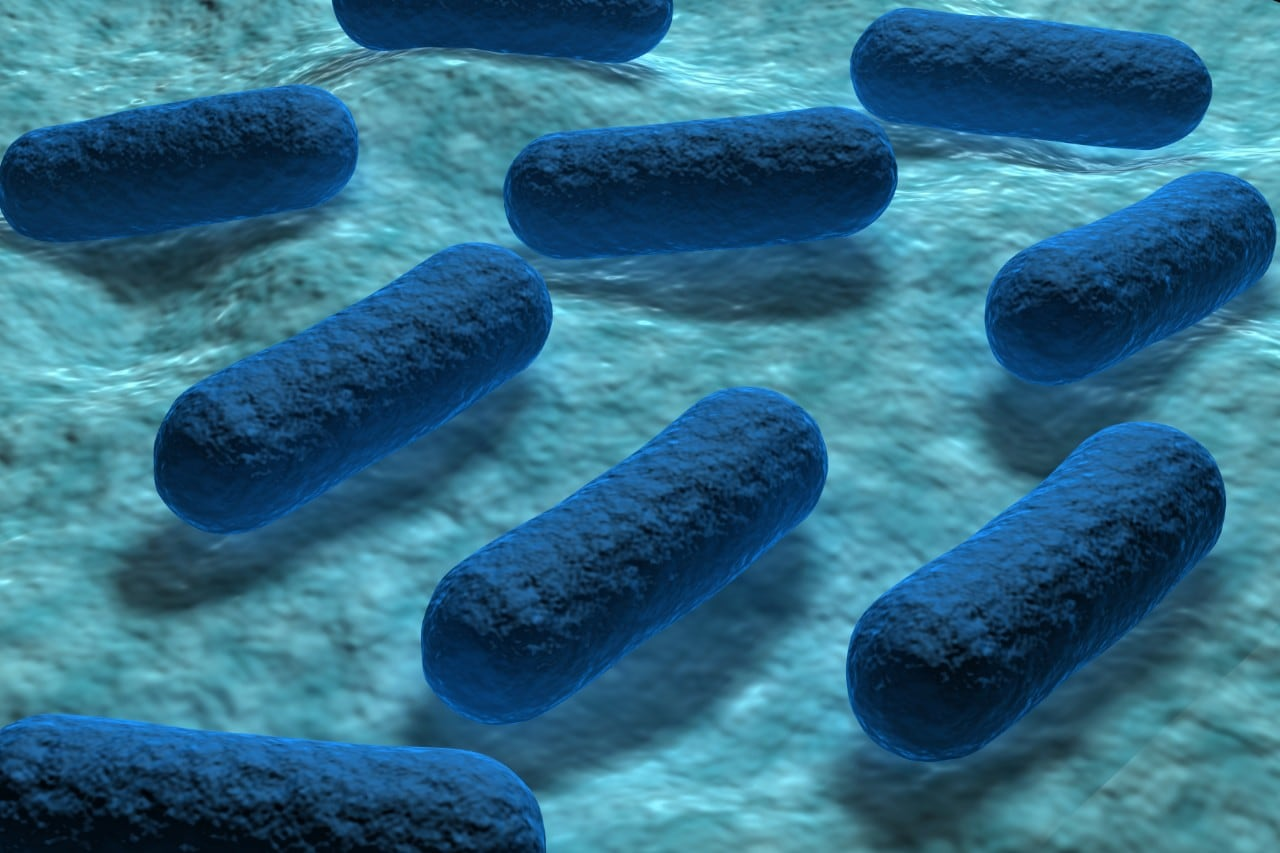 3d detailed illustration of E coli Bacteria