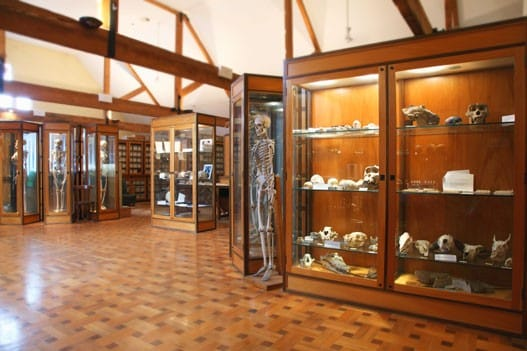 Museum entry from right including a skeleton and display cabinets