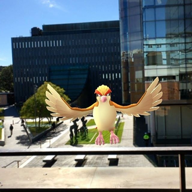 A Pokemon at Sydney Law School.