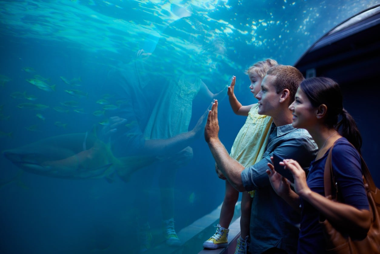 A family looking at a shark in an aquarium. Image: iStock