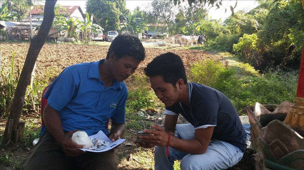 A student demonstrating how to use the mobile phone app to a Cambodian rice farmer.