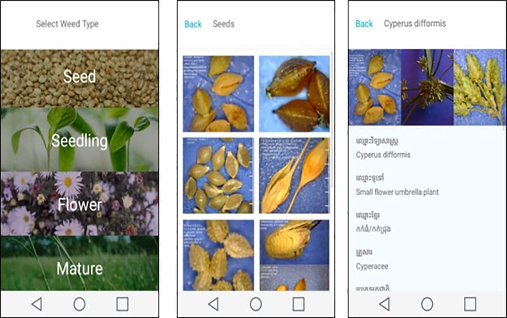 Examples of different pages of the WeedID App - the homepage, a seed photo gallery and species information page.