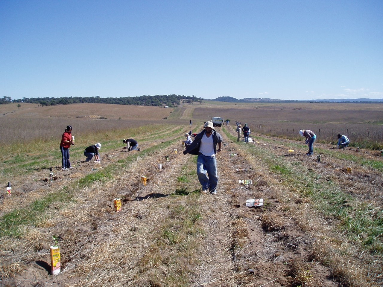 The University of Sydney's Landcare Society planting 1600 trees.