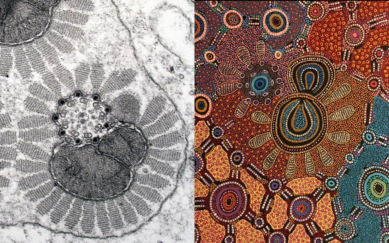 Microscopy image of moth sperm (left) by Greg Rouse and Witchetty Grub Dreaming by Yuendumu artist Jennifer Napaljarri Lewis.