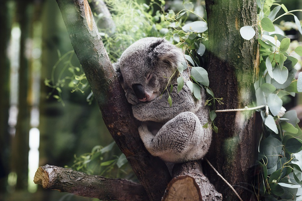 The sequencing of the koala genome was announced in July. Now scientists want to sequence the genomes of 1.5 million species.