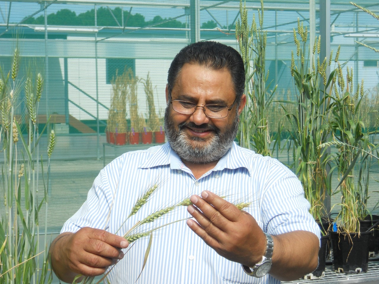 Professor Harbans Bariana from the Sydney Institute of Agriculture.