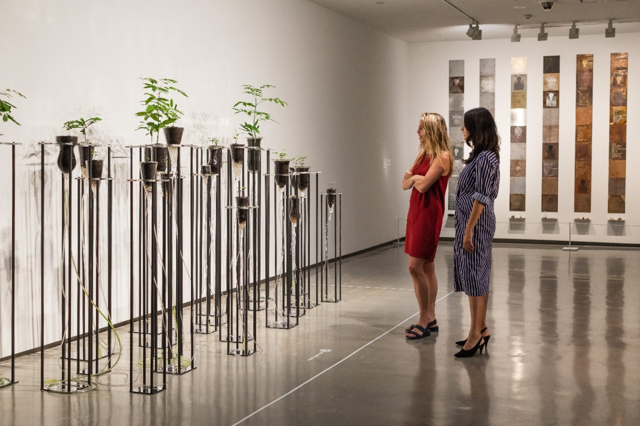 photo of art gallery visitors looking at an art work which is live plants in tall test tubes
