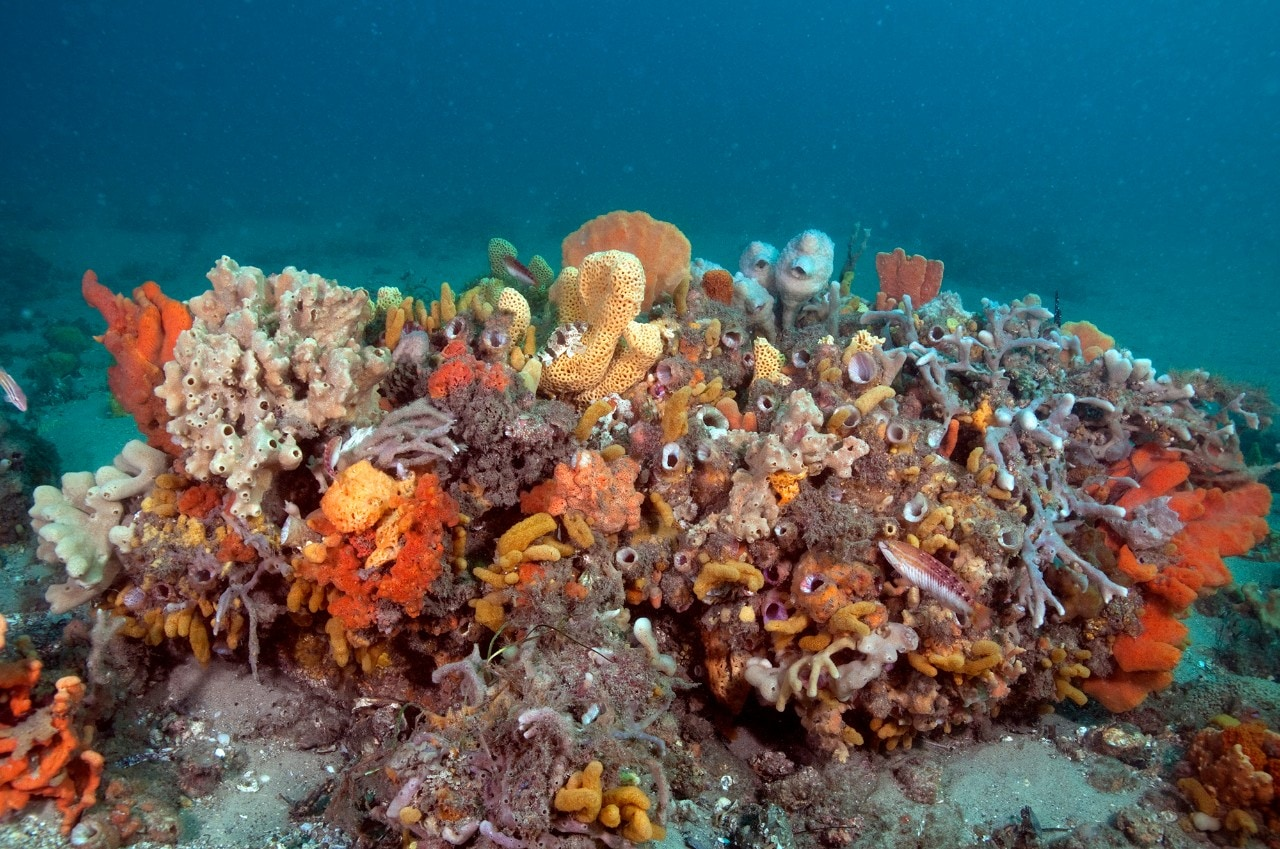 Photo of an old discarded fishing trap covered in soft corals