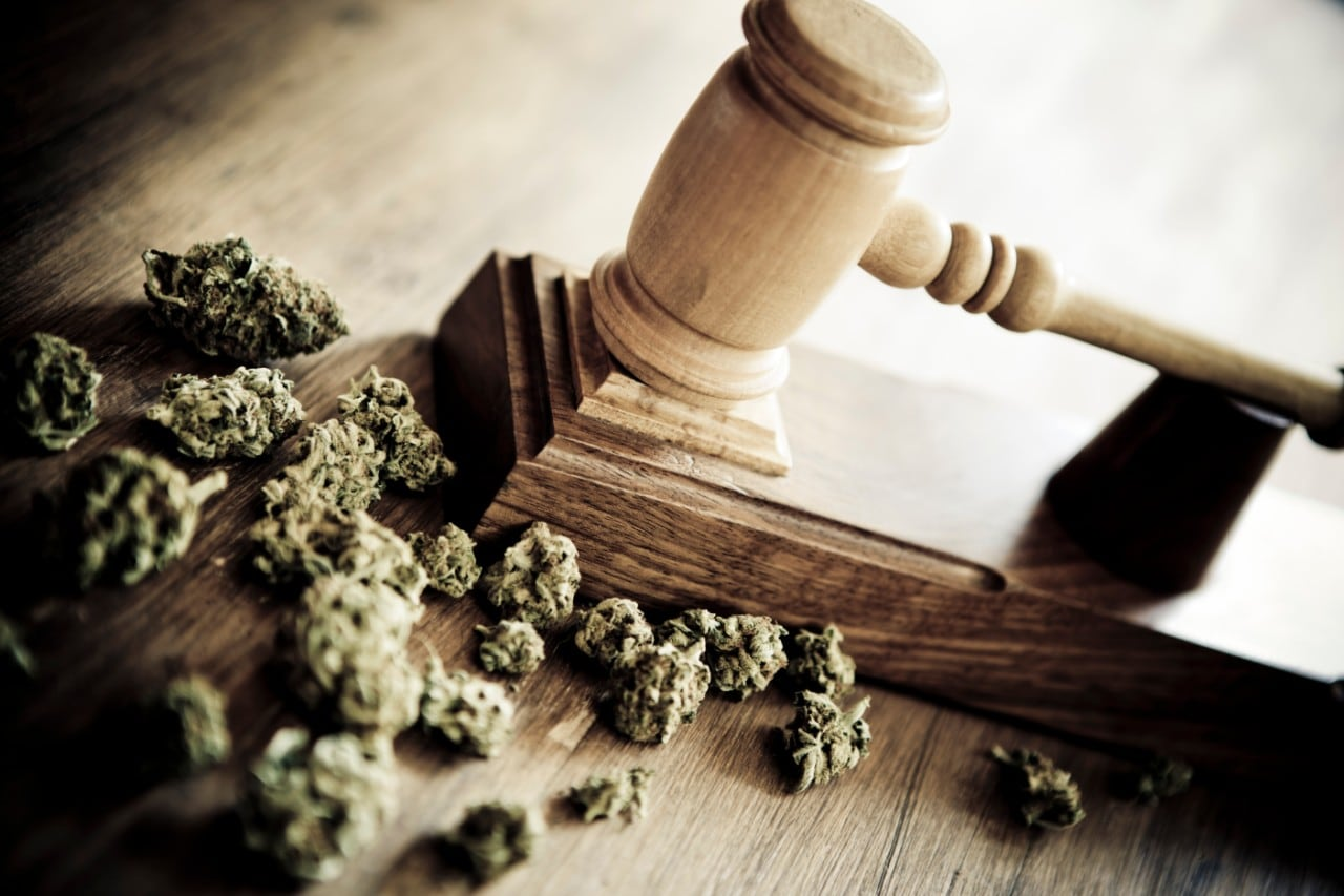 Photo of cannabis plant buds with a judge's gavel on a table