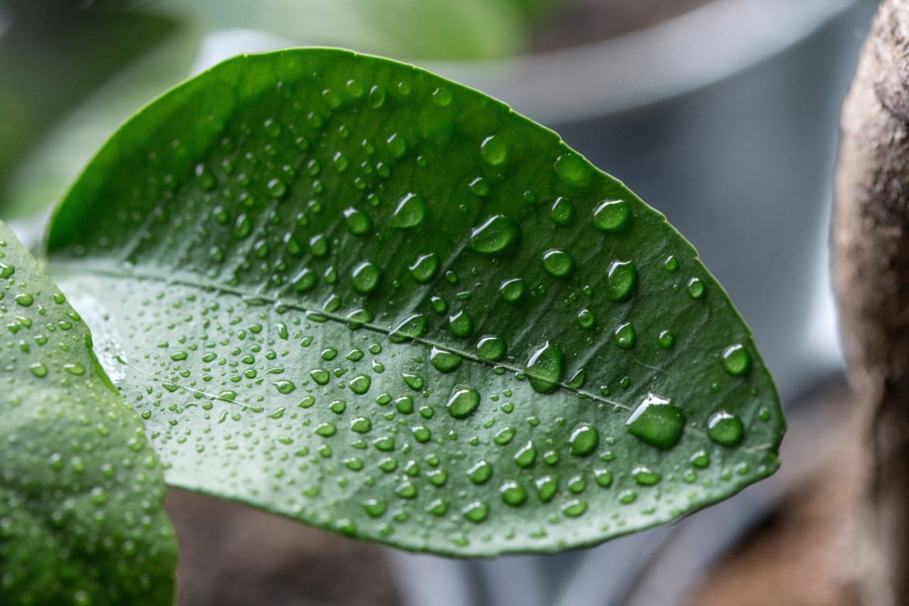 Photo of a leaf with water droplets