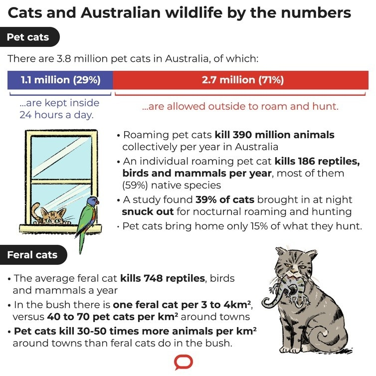 An illustration with facts and figures on cats
