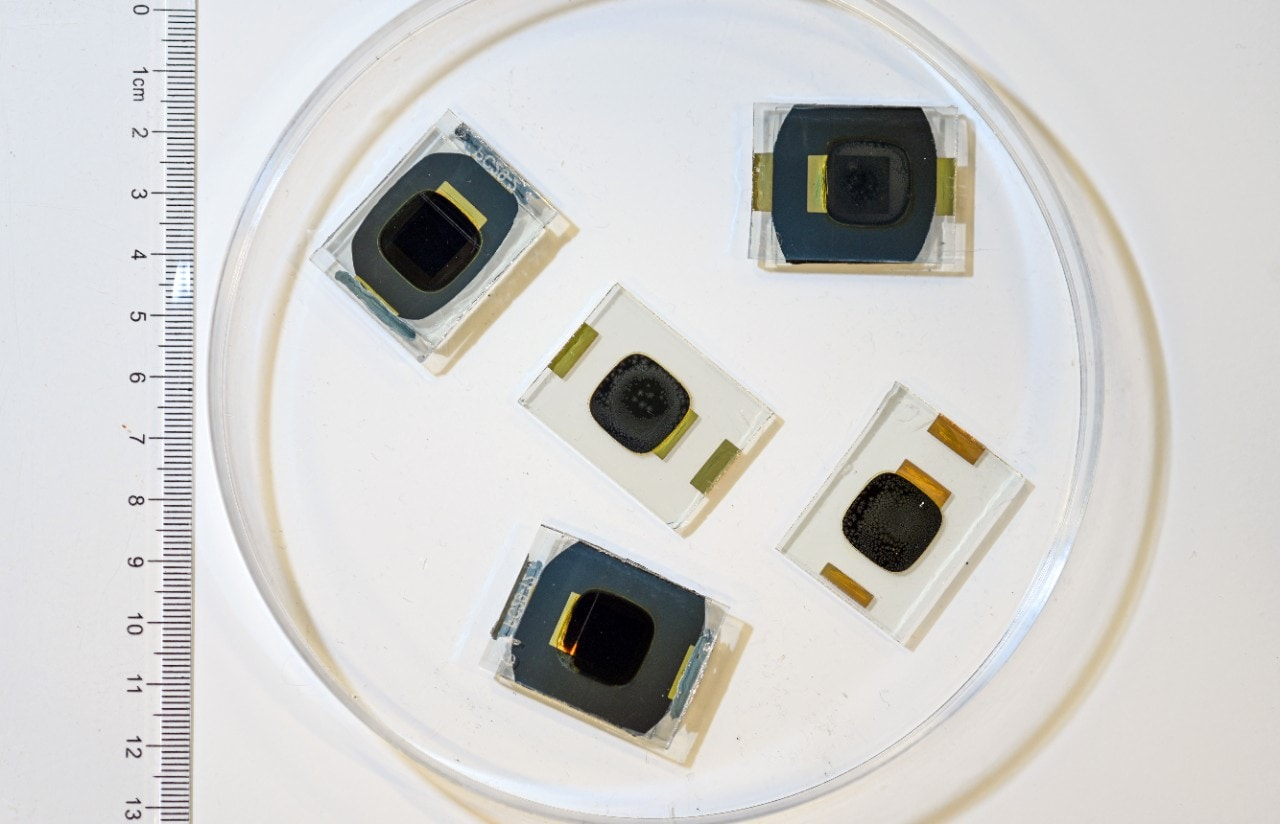 A sample of some of the perovskite cells used in the experiment. Photo: UNSW