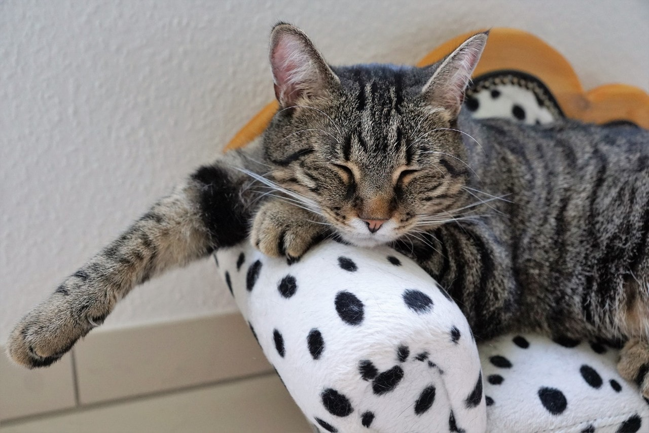 photo of a sleeping cat