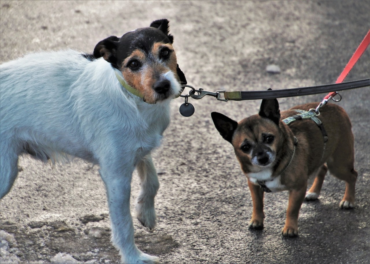 photo of two dogs on hot concrete