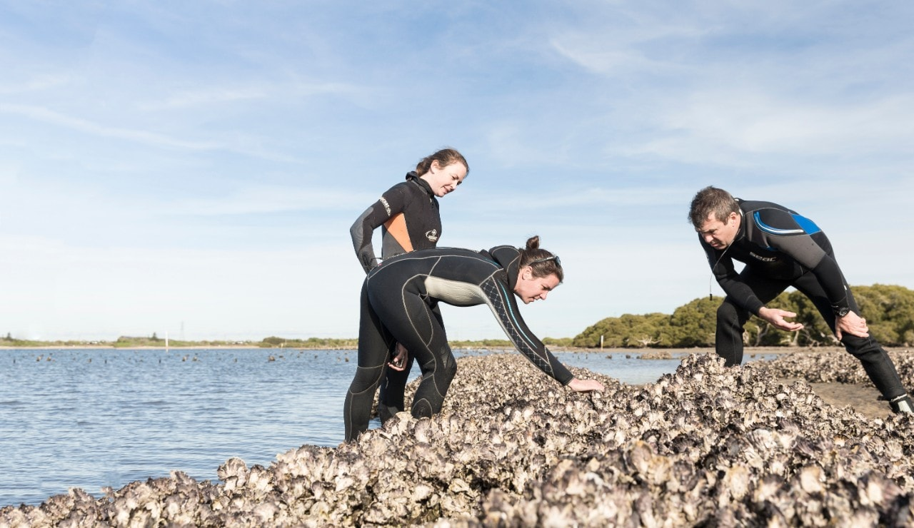 Researchers with oysters