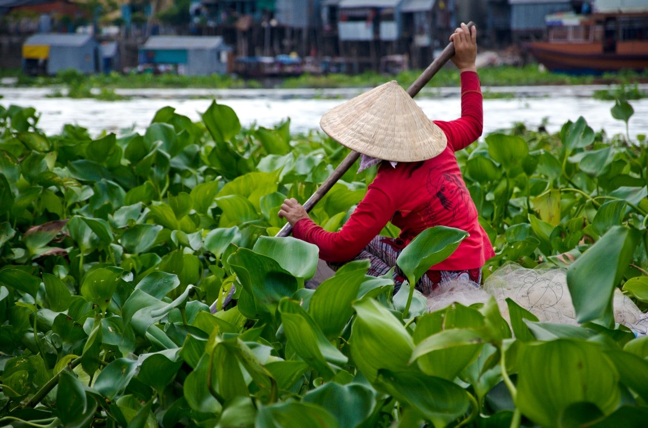 Asian woman paddling in lilypads