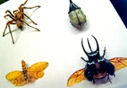 Insect Specimens From The Macleay Museums World Renowned Collection