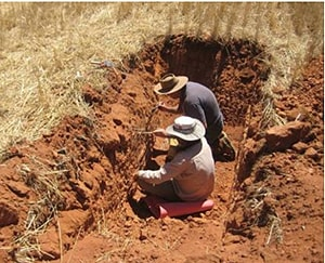 CSIRO scientists counting termite tunnels under one of the plots of the study. [Image: Theo Evans, CSIRO Entomology, Canberra]