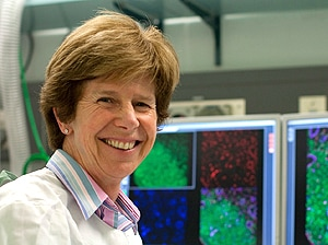 Professor Jennifer Gamble is the inaugural Wenkart Chair in Endothelium Medicine. [Image: Centenary Institute]
