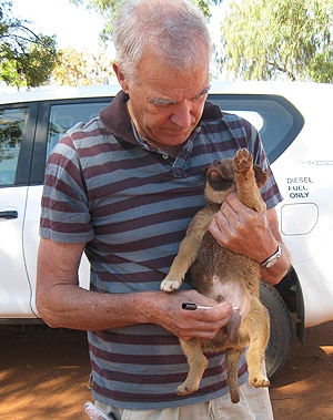 Dr Graeme Brown swabbing a dog in Ti Tree, a remote Aboriginal community in Northern Alice Springs.