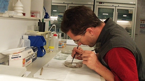 Craig Motbey preparing tissue from a rat's brain.