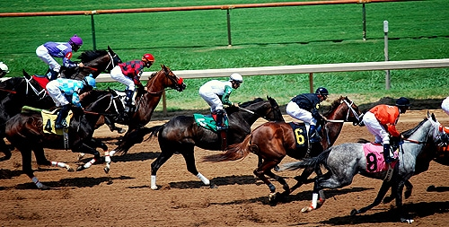 Starting to race at two years old is not detrimental to a horse's longterm career, finds the study. [Image: Flickr/Donnie Ray Jones, used under the Creative Commons licence]