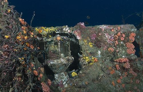 Associate Professor Ross Coleman found the vessel while on a private diving expedition.