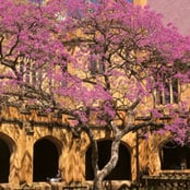 official_visits_jacaranda