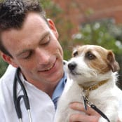 Photo of vet student with dog