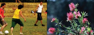 people playing sport/flowers
