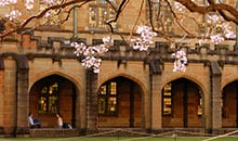University quadrangle and jacaranda blossoms