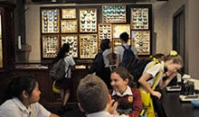 Students explore the Macleay Museum