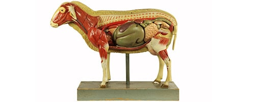 Sheep, possibly Marcus Sommer company, Germany. 20th century. On loan from Veterinary Science.