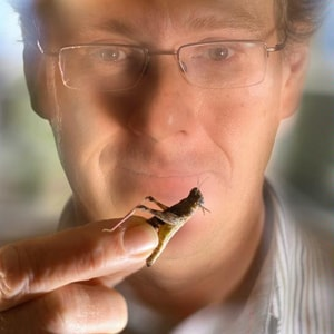 Eureka Prize finalist Steve Simpson with locusts, his study organism. Photo: University of Sydney.