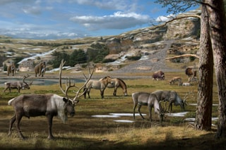 Reindeer, horses, and woolly mammoths were some of the key megafaunal species of the Late Quaternary. Image credit: Mauricio Anton.