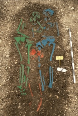 Skeletal remains of plague victims (false coloured). Photo by M. Harbeck, University of Munich.