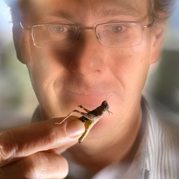 Professor Steve Simpson's research on locusts and diet have made him a finalist in the 2008 Australian Museum Eureka Prizes People's Choice Award.