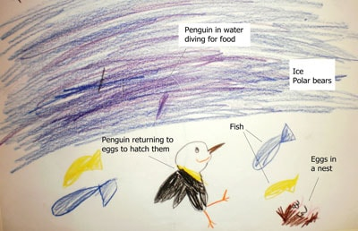 A drawing done by a five year old who took part in the pilot study for Melissa Slarp's Masters of Science research project, which seeks to understand the ecoliteracy of kindergarten students. In this drawing, the student received a total ecoliteracy score of 10 out of 15. They received points for depicting the penguin with fish, eggs in the nest and water. The interview process is essential to properly understand their drawings, as in this case, the student said in their interview that the drawing contained ice and polar bears, and that the purple streak was meant to depict a penguin diving for food.