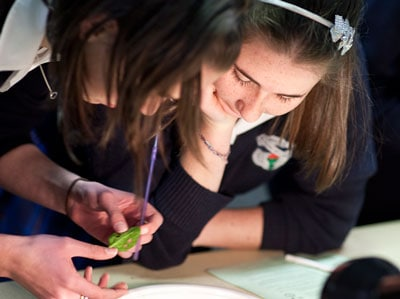 School students will do fun hands-on science activities run by the University of Sydney, such as this plant biology activity, at Science in the City.